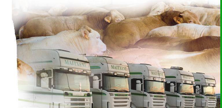Empresa transportes maitxene for Empresas de transporte en tenerife